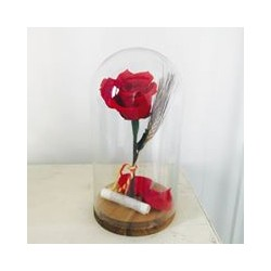 Campana de cristal con rosa roja preservada