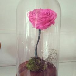 Rosa preservada de color rosa fucsia
